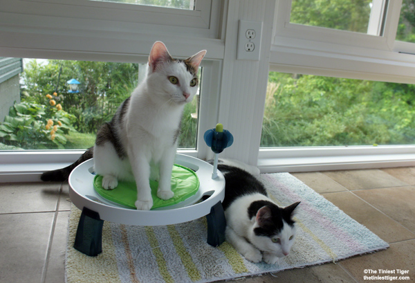The Catit Design Senses Comfort Zone Elevated Cat Bed Giveaway