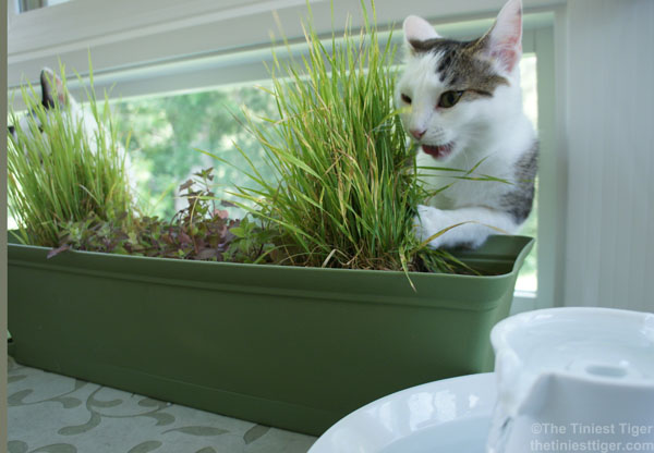 DIY Annie water cat garden