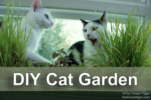 DIY Cat Garden Title image