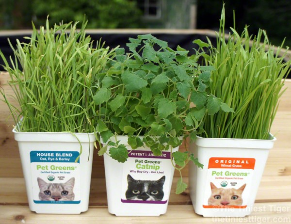 organic cat green images