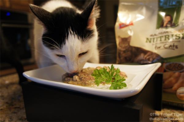 Eddie eating Nutrish Dinner