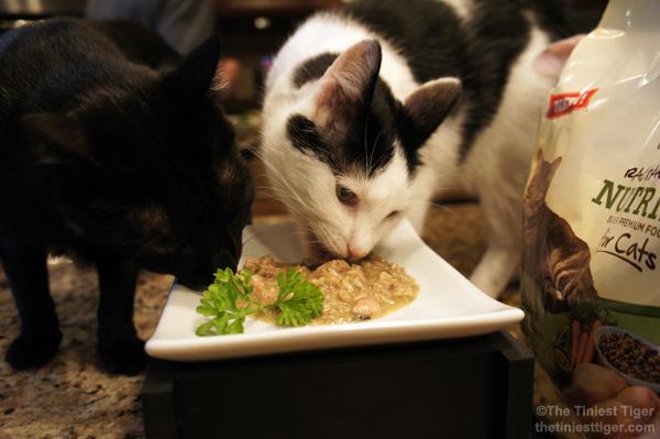 Eddie and MErcy eating Nutrish