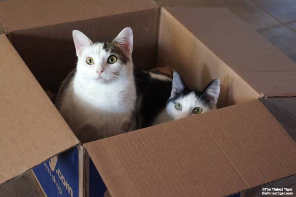 Annie and Eddie in a box