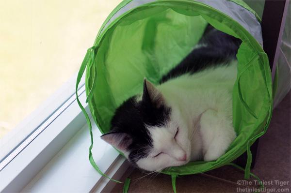 Eddie sleeping in green turnnel