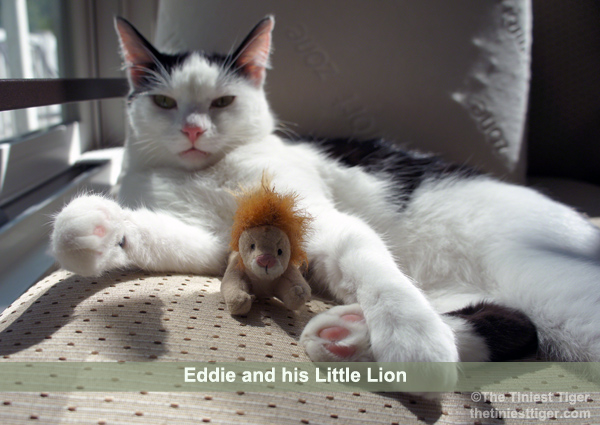 Eddie and his little lion