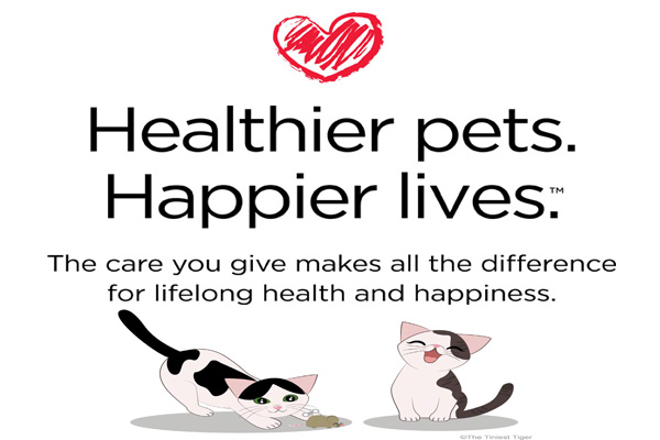 3 Steps to Keep Your Cat Healthy and Happy #GetHealthyHappy