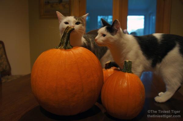 Annie Eddie inspect pumpkins