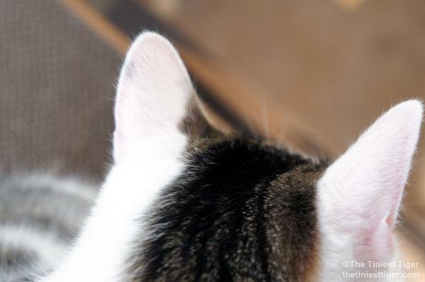Annie Pink ears