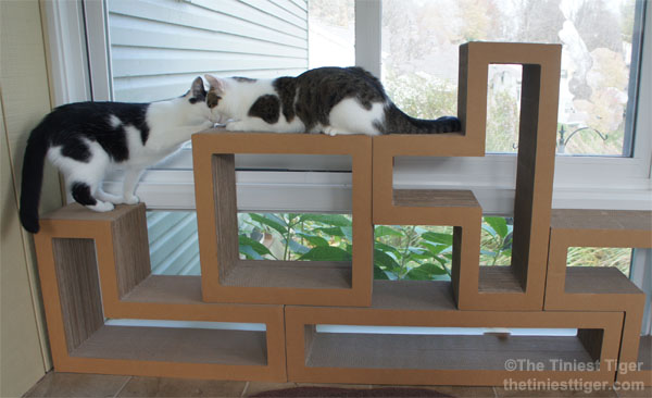 Cats Love the Katris Cat Tower. Katris Block Giveaway