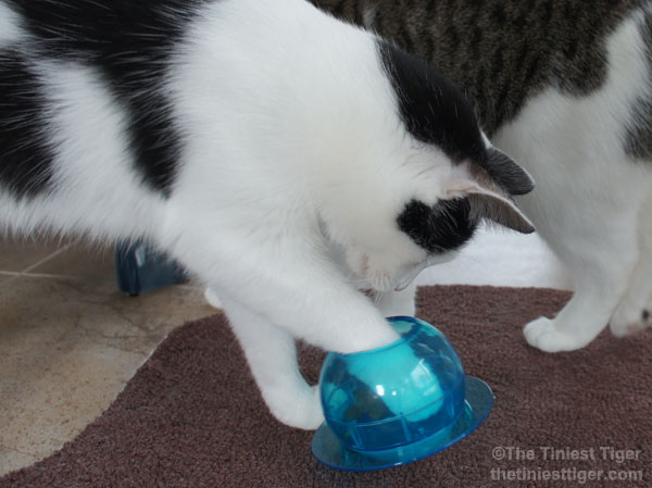 Cat Trick or Treat. PetSafe Puzzle Feeder Giveaway