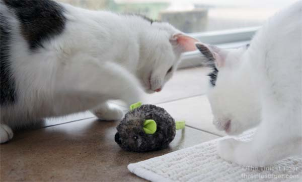 Annie and Eddie inspect the JG motor mouse toy