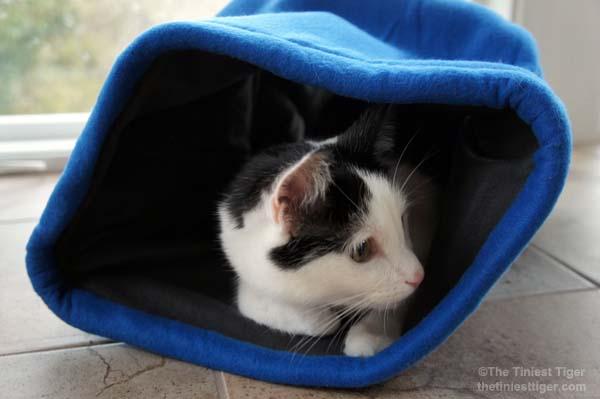 Eddie in comfy cocoon profile