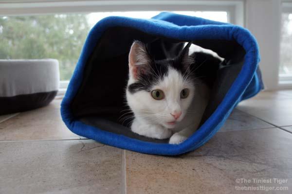 Eddie in comfy cocoon