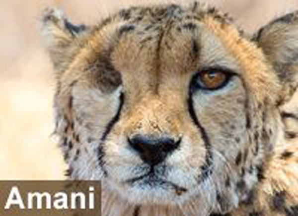 For Freya, Amani, Lentili and The Lion Guardians this Giving Tuesday