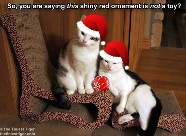 Annie and Eddie santa hats
