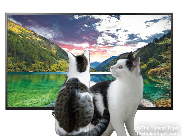 Win A 40″ LG 4K Smart LED TV in the #MyPetLovesLG4KTV Giveaway!