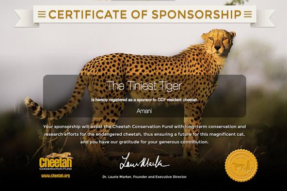 CCF Sponsorship certificate