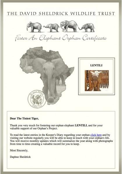 Lentili orphan elephant