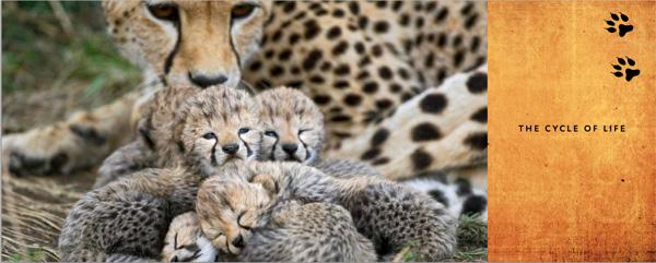 cheetah book image 2