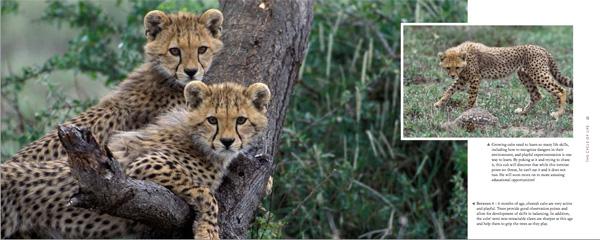cheetah book image 3