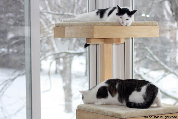 Snow Day For Cats!