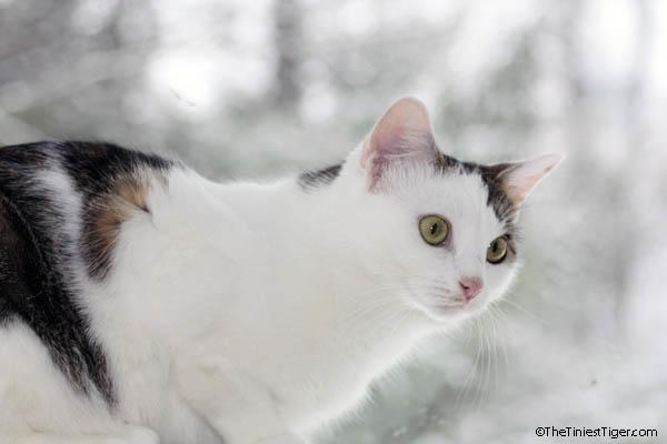 Annie snow day Feb 2015