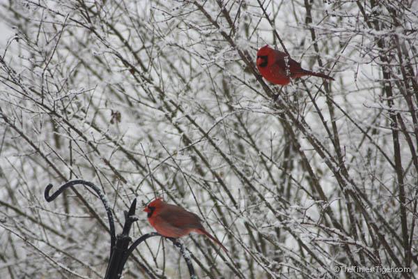 cardinals snow day