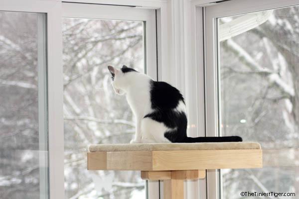 Eddie watching snow top of CPT