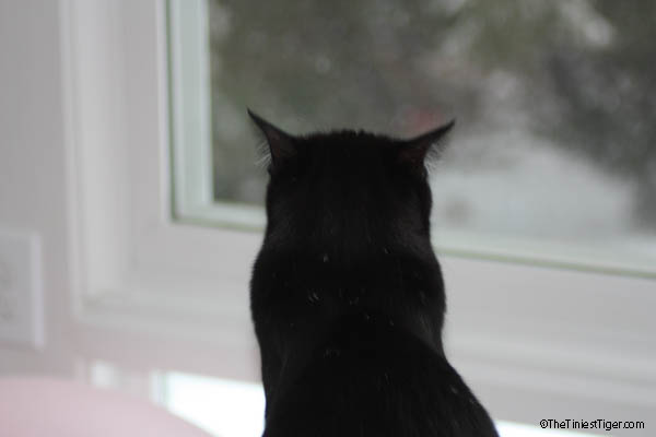 Mercy watching birds  snow day