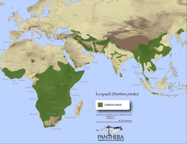 Panthera Leopard range