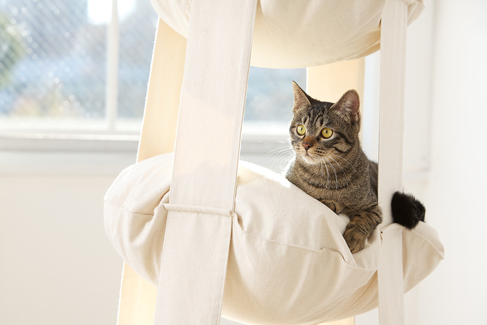 How to Keep Your Cat From Climbing Curtains.  The Cat's Trapeze