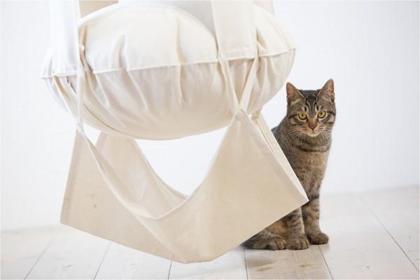 Cat's Trapeze