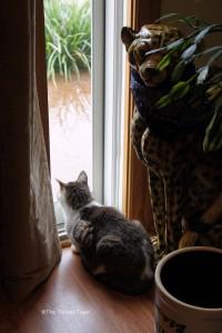 Gracey and Bad Kitty Rain