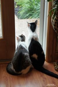 Annie and Eddie Watching the rain