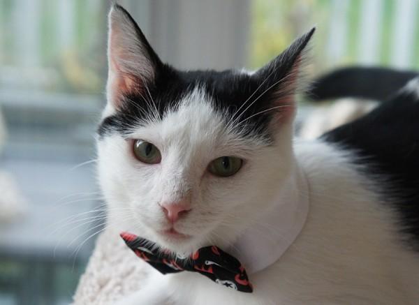 Eddie in bow tie