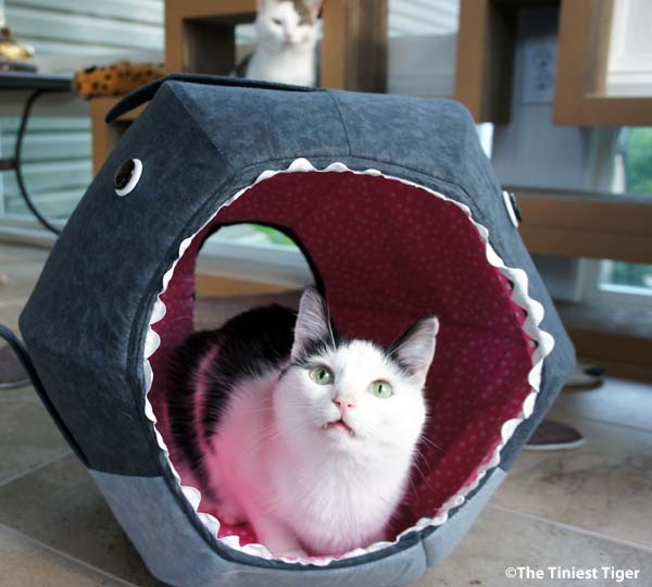 The Great White Shark Cat Ball Kitty Bed Giveaway! #KittenWeek
