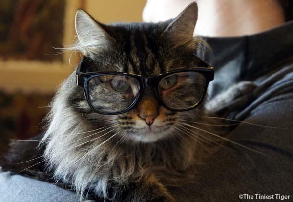 Tidy Cats Insiders Peek Into Tidy Innovation Lab