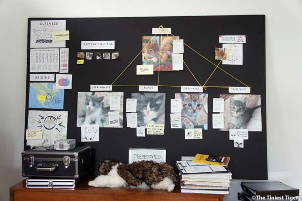 Kitten Pod 17 A
