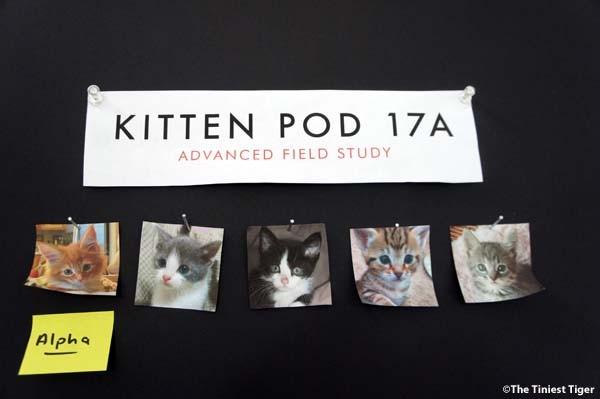 The 5 Kittens of Kitten Pod 17A