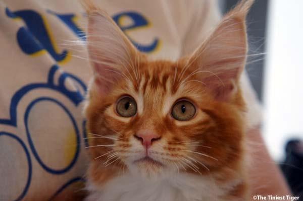 Kitten Week 2015