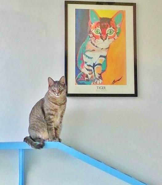 cat Dallas Cat Cafe