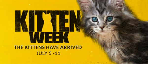 Kitten Week Tidy Cats