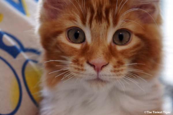 Tim the Alpha Kitten Week