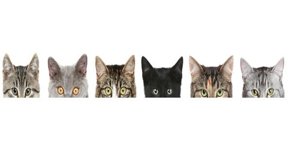 cat border