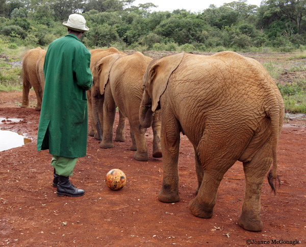 Behind The Scenes At The Elephant Nursery  #WorldElephantDay