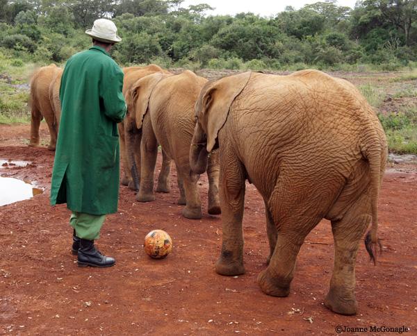 elephants single file