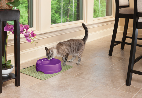 New PetSafe Current Pet Fountain Giveaway
