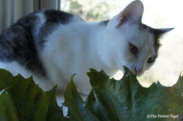 Annie on cat power tower with leaf