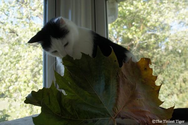 Eddie and the leaf