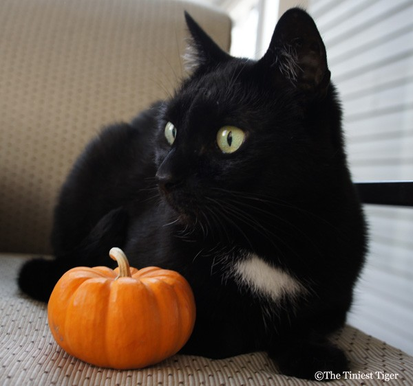 Mercy with little pumpkin